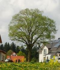 Die Gemeinde Altfraunhofen sucht Verstärkung für das Waldkindergarten-Team.
